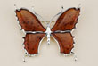 Broche papillon
